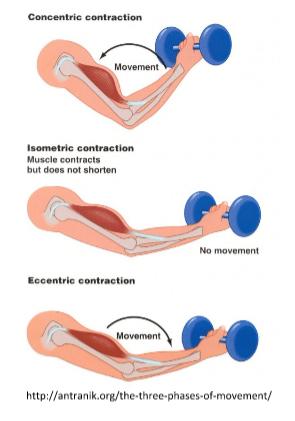 CONCENTRIC VS. ECCENTRIC TRAINING | Advanced MPR